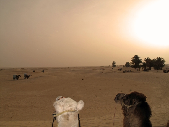 riding camels in the sahara at sunset