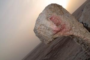 salt camel