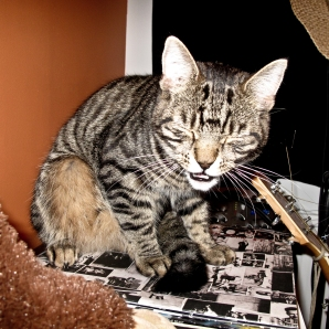 rock and roll tabby