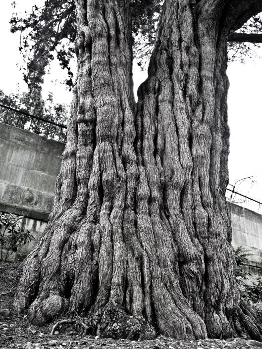 Bath - tree